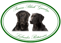 Precious Black Gundogs